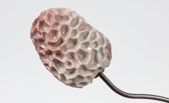 Jennifer Rose Sciarrino, Root to Lip Spore